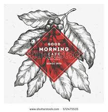 coffee plant illustration vector. Exellent Coffee Coffee Tree Illustration Engraved Style Vintage Coffee  Frame Vector Illustration On Plant Illustration