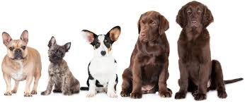 What Breed Is My Dog How To Identify Any Dog Breed All