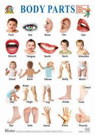 Tricolor Classic Educational Charts Body Parts