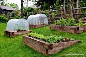 growing vegetables raised garden beds in australia vegetable gardening layout waist height kits medium
