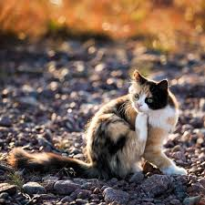 magical meow calico cat by ulf bodin