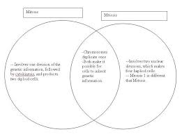 Comparing Mitosis And Meiosis Venn Diagram Writer Faq Content Marketplace Writeraccess Mitosis Essay