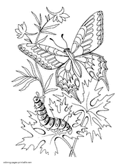 Small Picture Printable butterfly coloring pages