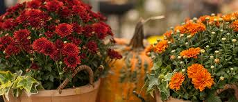10 things to do before winter your fall garden cleanup
