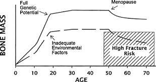 Bone Mass Chart Causes Of Low Peak Bone Mass In Women Sciencedirect