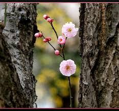 natural framing photography. Natural-framing-in-photography-photo-retouching-sample Natural Framing Photography