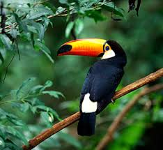 Image result for RAINFORESTS