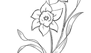 Fiori Semplici Da Disegnare Migliori Pagine Da Colorare