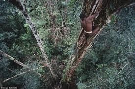 Sleeping With Cannibals  Travel  SmithsonianKorowai Treehouse
