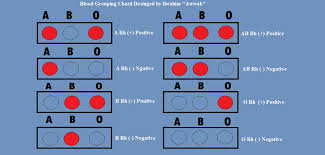 Difference Between O Positive And O Negative Compare The