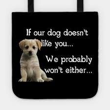 Wisdom Of A Dog