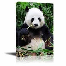 giant panda eating bamboo wall decor ation on giant panda wall art with giant panda eating bamboo wall decor ation canvas art wall26