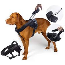 Two Hound Design Harness Yogadog Heavy Duty Dog Harness Soft Padded With Special