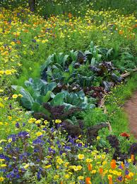 Ornamental Kitchen Garden Combining Vegetables And Flowers In Your Garden Diy