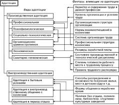 Курсовая работа Процесс адаптации как важнейший элемент системы  Рис 1 1 Виды адаптации и факторы на нее влияющие
