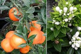 Risultati immagini per fiore e frutto