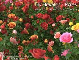 hd flowers 1 roses hq plants