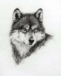 A picture which consists only of actual white and black pixels is a binary image. White Wolf Drawings Fine Art America