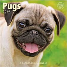 pugs 2019 wall calendar calendars books gifts