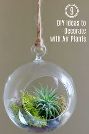 9 ideas to decorate with air plants