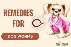 natural heartworm treatment. Natural Heartworm Treatment Home Remedies For Worms In Dogs Reviews E