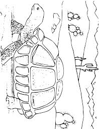 Small Picture Tortoise Coloring Page for Kids Free Printable Picture