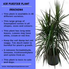 ... for cats and dogs. indoor air purifying plants