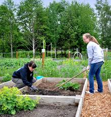 community gardening. Growing Together Photo Of Two Young Ladies Raking And Planting At A Garden Plot. Beaverton\u0027s Community Gardening D