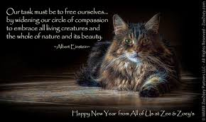 Image result for CATS HAPPY NEW YEAR