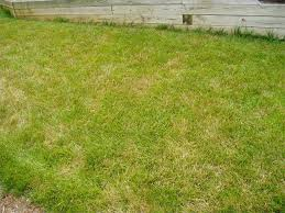 Brown Patch Disease Diseases That Attack Grass And How To Treat Them