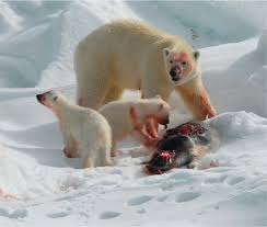 Climate's Role in Polar Bear Past | Science