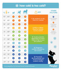 How Long Can You Survive In Cold Water Chart How Cold Is Too Cold For Your Dog Cold Weather Pet Safety