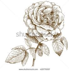 Small Picture Rose Engraving Stock Images Royalty Free Images Vectors