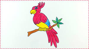 baby birds drawing for kids. Exellent Baby Bird Drawing For Kids U0026 Beginners  How To Draw Parrot Step By For Baby Birds Y