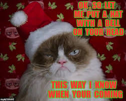 grumpy cat christmas hat.  Grumpy Grumpy Cat Christmas  OK  SO LET ME PUT A HAT WITH BELL ON To Hat T