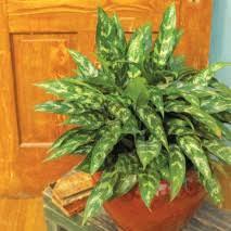 best low light office plants. The Best Low Light Office Plants