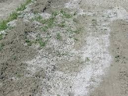 Почвы Реферат Солоди Почвы Реферат
