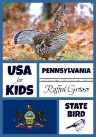 Small Picture Pennsylvania State Bird USA for Kids