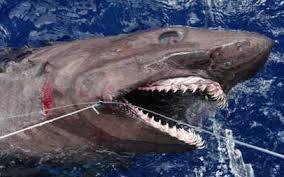 Sharks Florida Go Fishing
