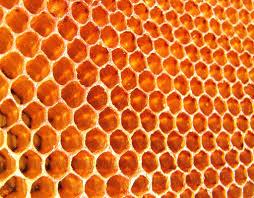 Resultado de imagen para atrapada en un panal de abejas