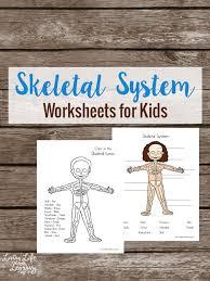skeletal-system.jpg