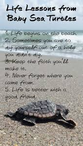 Turtle Quotes Life Lessons from Baby Sea Turtles Baby sea turtles Life lessons 11