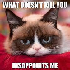 grumpy cat so beautiful. Perfect Beautiful Grumpy Cat Is So Wrong For This For So Beautiful T