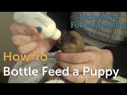 Puppy Bottle Feeding Chart How To Bottle Feed A Puppy
