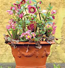 Small Picture 12 best Ideas For Winter Containers And Window Boxes images on