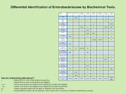 Enterobacteriaceae Biochemical Reactions Chart Biochemical Test Eneterobacteria Coursework Sample