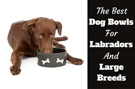 Decorative Dog Bowls Best Dog Bowls For Labradors And Other Large Dogs