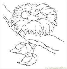 Small Picture Empty Bird Nest Coloring Page Coloring Coloring Pages