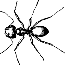 Small Picture Download Coloring Pages Ant Coloring Page Ant Coloring Page Free