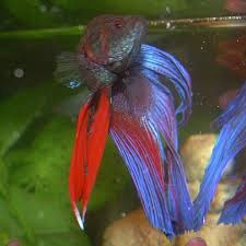 small screenshot 1 office fish. build a cool tank for your home or office and keep betta fish happy small screenshot 1